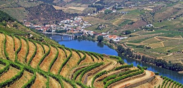Douro-Vinhateiro